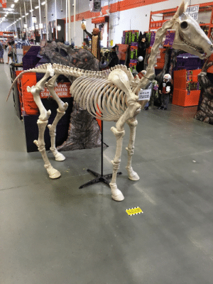 """Ass, Fucking, and Gif: ce  LEVEL  FH OWEEN  STAR ? HERE asynchronouscommunication: kaijutegu:  flabbergasted-and-inspired:  wintercoffin:  kaijutegu:  allisonpregler:  upstartgeek:  Ok real talk WHO is going to shell out 200+ dollars for this almost life size horse skeleton  Originally posted by haha-suck-my-ass  me, actually  can you fucking sit on it tho  wouldn't that be really uncomfortable? is it here, @kaijutegu?  I can't sit on it but a skeleton can!   THAT SKELETON LOOKS SO EXCITED FOR THIS  """"LOOK MOM I FINALLY GOT THAT PONY YOU PROMISED ME BACK WHEN I WAS 6! BET YOU THOUGHT I DIDN'T REMEMBER!"""""""