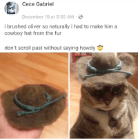 Cowboy, Him, and Fur: Cece Gabriel  December 19 at 5:55 AM  i brushed oliver so naturally i had to make him a  cowboy hat from the fur  don't scroll past without saying howdy