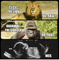 FWD: Here's what's wrong with America!: CECIL  THE LION  HARAMBE  THE GORILLA  OUTRAGE!  OUTRAGE!  MEH FWD: Here's what's wrong with America!