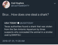 melonmemes:  Guys, act cool: Ced Hughes  @CedTheMIGHTY  Bruv... How does one steal a shark?  USA TODAY @USATODAY  Texas authorities found a shark that was stolen  from the San Antonio Aquarium by three  suspects who concealed the animal in a stroller.  usat.ly/2MOFGLI  2018-07-31, 11:28 AM melonmemes:  Guys, act cool