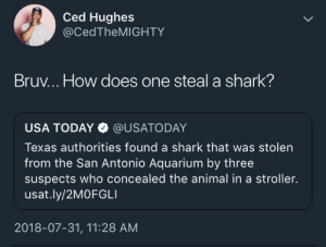 Guys, act cool by Vinicusv MORE MEMES: Ced Hughes  @CedTheMIGHTY  Bruv... How does one steal a shark?  USA TODAY @USATODAY  Texas authorities found a shark that was stolen  from the San Antonio Aquarium by three  suspects who concealed the animal in a stroller.  usat.ly/2MOFGLI  2018-07-31, 11:28 AM Guys, act cool by Vinicusv MORE MEMES