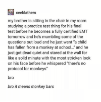 "monkey bars: ceeblathers  my brother is sitting in the chair in my room  studying a practice test thing for his final  test before he becomes a fully certified EMT  tomorrow and he's mumbling some of the  questions out loud and he just went ""a child  has fallen from a monkey at school. and he  just got dead quiet and stared at the wall for  like a solid minute with the most stricken loolk  on his face before he whispered ""there's no  protocol for monkeys""  bro  bro it means monkey bars"