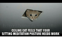Lol use a cushion to prevent slouching: CEILING CAT FEELS THAT YOUR  SITTING MEDITATION POSTURE NEEDS WORK Lol use a cushion to prevent slouching