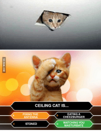 ceiling cat is watching you: CEILING CAT IS  FIXING THE  EATING A  ANTENNA  CHEEZBURGER  WATCHING YOU  STONED  MASTURBATE