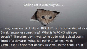 ceiling cat is watching: Ceiling cat is watching you...  ...aw, come on. A donkey? REALLY? Is this some kind of sichk  Shrek fantasy or something? What is WRONG with you  people? The other day it was some dude with a dead dog in  front of a daycare. What is it going to be next week -  GerbilFest? I hope that donkey kicks you in the head. I quit.