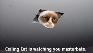 Since everyone liked Grumpy Cat here are a few more : pics: Ceiling Cat is watching you masturbate. Since everyone liked Grumpy Cat here are a few more : pics