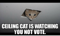Facebook, Memes, and Cat: CEILING CAT IS WATCHING  YOU NOT VOTE Spammed my Facebook with voting memes. Ran out. Made more.