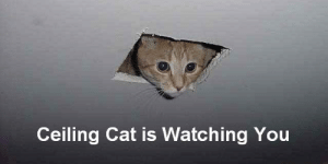Our Picks for the 10 Best Cat Memes of All Time: Ceiling Cat is Watching You Our Picks for the 10 Best Cat Memes of All Time
