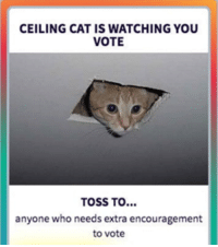 Fwd: Don't forget to VOTE!!!: CEILING CAT IS WATCHING YOU  VOTE  TOSS TO  anyone who needs extra encouragement  to vote Fwd: Don't forget to VOTE!!!