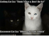 """ceiling cat is watching you: Ceiling Cat Sez """"Think Tilice & Don't Do Itz!""""  Basement Cat Sez """"White Catz Tall 22  Much""""  IORNHAS HEEZEURGER.COM"""