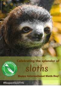 Our spirit animal!!!!!!!!!!!!!: Celebrating the splendor of  SANcro  Sloths  STA RIC  Happy International Sloth Day!  Respect SLOTHs Our spirit animal!!!!!!!!!!!!!