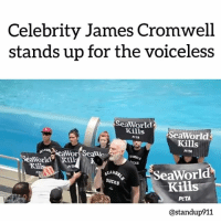 "Animals, Beautiful, and Calvin Johnson: Celebrity James Cromwell  stands up for the voiceless  SeaWorld  Kills  SeaWorld  Kills  NTA  PETA  Wor Sea  SeaWorld Kill  411  CKS  Kill  PAT  EAMOR  SUCKS  SeaWorld  Kills  PeTA  @standup911 Academy Award Nominee James Cromwell stood and bravely protested during a SeaWorld Orca Encounter show — despite an aggressive and violent reaction from a few of the ""abusement"" park's fans. Cromwell and his fellow protestors spoke on behalf of the orcas who can't speak for themselves and did so on a Facebook Live feed for the world to see. Cromwell took the megaphone and commanded the audience's attention. ""Orcas deserve a full life in the ocean, not a life sentence of swimming endless circles until they drop dead from disease,"" he started. ""My friends at PETA and I want SeaWorld to move these intelligent animals to seaside sanctuaries without delay."" While SeaWorld has agreed not to breed orcas in captivity, since the backlash caused by Blackfish, but it isn't enough. Orcas and other beautiful animals are still suffering today. PETA's protest asks, simply, for SeaWorld to build and establish sanctuaries so orcas can finally have peace after being forced to live in, what is for them, a tiny, cramped space with no cover from the sun. Whales don't belong in tanks.Cromwell and the protestors were later handcuffed and taken into police custody. We applaud all of them for their courage and for standing up for animals. - r-p - @crisveganfit - standup911 bethechange govegan seaworld animalcruelty"