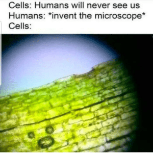 Brain, Free, and Never: Cells: Humans will never see us  Humans: *invent the microscope*  Cells: Invest and you may get free brain cells! via /r/MemeEconomy https://ift.tt/2Jnse4G