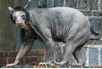 Here is a shaved bear  - Argon: CEP Here is a shaved bear  - Argon