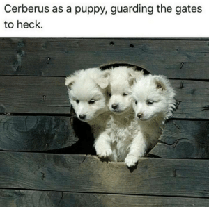 Puppy, The Gates, and Cerberus: Cerberus as a puppy, guarding the gates  to heck.