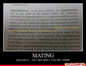 Matinghttp://omg-humor.tumblr.com: cerebral cortex.  Hypothalamus As its name implies, the hypothalamus  lies at the base of the brain, under the thalamus.  Although the hypothalamus is a relatively small structure,  it is an important one. It controls the autonomic nervous  system and the endocrine system and organizes behaviors  related to survival of the species-the so-called four F's:  fighting, feeding, fleeing, and mating.  The hypothalamus is situated on both sides of the  ventral portion of the third ventricle. The hypothalamus  is a complex structure, containing many nuclei and fiber  tracts. Figure 3.16 indicates its location and size. Note that  the pituitary gland is attached to the base of the hypothal-  amus via the pituitary stallk. Just in front of the pituitary  MATING  Now with a.... OH I SEE WHAT YOU DID THERE  TASTE OF AWESOME.COM Matinghttp://omg-humor.tumblr.com