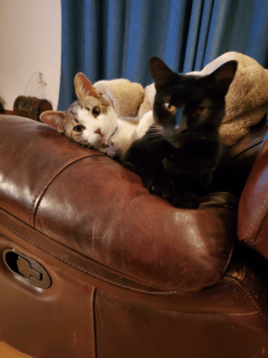 I caught 'em being sweet! They pretend to hate each other. Cat Daddy on the right and Prince Ceasar on the left.: CESAR I caught 'em being sweet! They pretend to hate each other. Cat Daddy on the right and Prince Ceasar on the left.