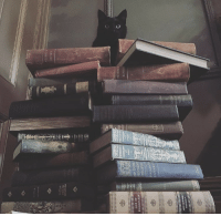 wickerrabbit:  Knowledge is power.   What are you reading these days? : CESE  MEX  INDE  WASHINGTON wickerrabbit:  Knowledge is power.   What are you reading these days?