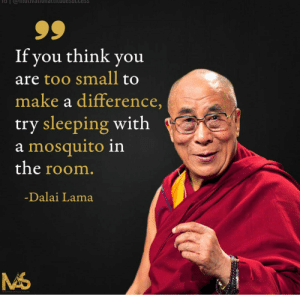 Dalai Lama, Sleeping, and Asshole: Cess  If you think you  are too small to  make a difference,  try sleeping with  a mosquito in  the room.  -Dalai Lama Bnnneeeeeeeeeee….You asshole