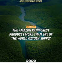 "Amazon, Memes, and American: CFACTSPERT  THE AMAZON RAINFOREST  PRODUCES MORE THAN 20% OF  THE WORLD OXYGEN SUPPLY The AmazonRiverBasin is home to the largest rainforest on Earth. The basin - roughly the size of the forty-eight contiguous UnitedStates - covers some 40% of the South American continent and includes parts of eight South American countries: Brazil, Bolivia, Peru, Ecuador, Colombia, Venezuela, Guyana, and Suriname. The AmazonRainforest is not only the largest forest in the world - it is often called the ""Lungs of the World"". More than 20 percent of the world oxygen is produced in the Amazon Rainforest. Rainforests are one of Earth's oldest continuous ecosystems and play a significant part in the health of our global environment by digesting and converting CarbonDioxide into oxygen."