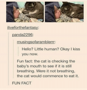 still breathing: CFS  iliveforthefantasy:  panda2296:  musingsofaramblerrr:  Hello? Little human? Okay I kiss  you now.  Fun fact: the cat is checking the  baby's mouth to see if it is still  breathing. Were it not breathing,  the cat would commence to eat it.  FUN FACT