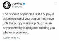 Funny, Puppies, and Grey: CGP Grey  @cgpgrey  The first rule of puppies is: if a puppy is  asleep on top of you, you cannot move  until the puppy wakes up. Sub clause  anyone nearby is obligated to bring you  whatever you need  12/1/17, 11:46 AM Second rule: No matter how old your dog is, it's always still your puppy. https://t.co/Fi6UV85hmD