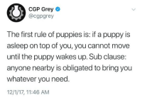 Puppies, Grey, and Puppy: CGP Grey  @cgpgrey  The first rule of puppies is: if a puppy is  asleep on top of you, you cannot move  until the puppy wakes up. Sub clause:  anyone nearby is obligated to bring you  whatever you need.  12/1/17, 11:46 AM