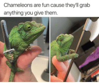 MeIRL, Fun, and Them: Chameleons are fun cause they'll grab  anything you give them Meirl