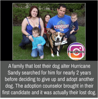 Facts, Family, and Friends: CHAMPIONG  Fact Point  A family that lost their dog alter Hurricane  Sandy searched for him for nearly 2 years  before deciding to give up and adopt another  dog. The adoption counselor brought in their  first candidate and it was actually their lost dog Follow our page for more Facts 😇 Don't forget to tag your friends 💖