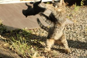 Stumbled upon this perfectly timed moment of cat-fu on the Internet: chan4chan.co m Stumbled upon this perfectly timed moment of cat-fu on the Internet