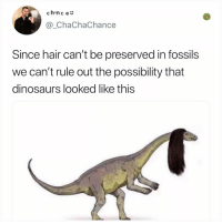 Memes, Dinosaurs, and Fossil: chanc e  @_ChaChaChance  preserved in fossil  Since hair can't be  we can't rule out the possibility that  dinosaurs looked like this  s You learn something new every day here at Kale Salad University