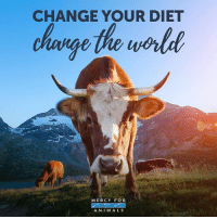 Animals, Memes, and Diet: CHANGE YOUR DIET  change the wold  MERCY FO R  A N I M A LS One simple choice can make a huge difference for animals, the planet, and your health. 👌 govegan vegansofig mercyforanimals loveanimals bethechange kindness animallovers