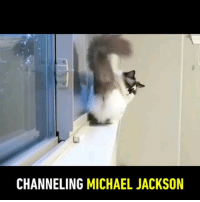 Thanks @albertbabycat for moonwalking in this 9GAGFunoff vid!: CHANNELING MICHAEL JACKSON Thanks @albertbabycat for moonwalking in this 9GAGFunoff vid!