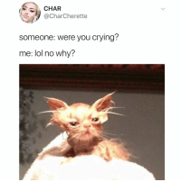 Caturday, Crying, and Funny: CHAR  @CharCherette  someone: were you crying?  me: lol no why? I'm not crying you're crying😿 caturday TwitterCreds: CharCherette