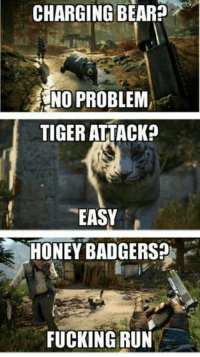 CHARGING BEAR?  NO PROBLEM  TIGER ATTACK?  EASY  HONEY BADGERS?  FUCKING RUN Honey badgers are nasty lil buggers.   ~Vintage