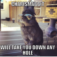 CHARISMABBT  WILL TAKE YOU DOWN ANY  HOLE  DOWNLOAD MEME GENERATOR FROM HTTP:llMEMECRUNCH.COM Rabbit