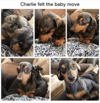Charlie, Memes, and Good: Charlie felt the baby move Charlie's a very handsome good boy