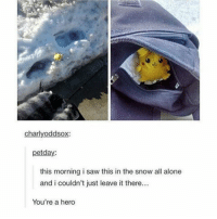 Being Alone, Anime, and Charmander: charlvoddsox:  petday:  this morning i saw this in the snow all alone  and i couldn't just leave it there...  You're a hero Some heros don't wear capes… 😎 - Sent in by FunnyPokemonAmbassador @711broncos ! Thanks! ___________ Want to become an official Funny Pokemon Ambassador too? Then DM us your best and funniest pokemon memes to feature 😀 ___________ pokemon nintendo anime hero geek deviantart digimon charmander comics pikachu meme playstation dankmemes pokemoncards followme gamer save pokemontcg dank pokemongo tumblr pokemonultrasunmoon likeme lol disney nintendoswitch switch