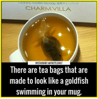 Goldfish, Memes, and Charming: CHARM VILLA  INSTAGRAMI@IFACTS DAILY  There are tea bags that are  made to look like a goldfish  swimming in your mug 😂😂😂 Tag your friends