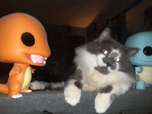 Charmander & Squirtle V.S Meowth That's right!: Charmander & Squirtle V.S Meowth That's right!