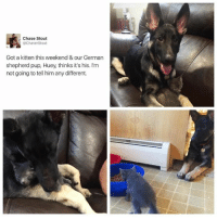 Dank, Chase, and German Shepherd: Chase Stout  Chaser Stout  Got a kitten this weekend & our German  shepherd pup, Huey, thinks it's his. I'm  not going to tell him any different.