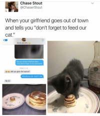 """Girl Memes, Cat, and Madness: Chase Stout  Chaser Stout  When your girlfriend goes out of town  and tells you """"don't forget to feed our  cat  Kenzie Jones d  Do you know if Wilson likes  chocolate chips in his pancakes  Today 0:01 AM  did you give him some?  Would you be mad if I did  No lo OMG I WANT A BF JUST SO HE CAN DO THIS FOR ME AND PANCAKES I JUST NEED A REAL PIZZA DADDY TO TAKE CARE OF US LIKE THIS OMG 😭😭😭(@chasestout)"""