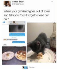 """Lol, Memes, and Chase: Chase Stout  @Chaser Stout  When your girlfriend goes out of town  and tells you """"don't forget to feed our  cat  Do you know if Wilson kes  chocolate chips in his pancakes  uudid you give him some?  Would you be mad if did  No lol  Ctif Postize"""