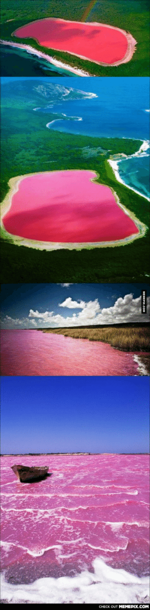 Lake Hillier, Australia. The only living organism in it, Dunaliella Salina, causes the salt content in the lake to create a red dye.omg-humor.tumblr.com: CHECK OUT MEMEPIX.COM  MEMEPIX.COM Lake Hillier, Australia. The only living organism in it, Dunaliella Salina, causes the salt content in the lake to create a red dye.omg-humor.tumblr.com