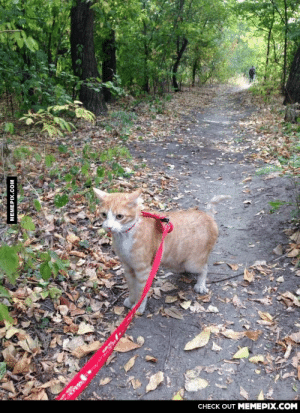 Who says you can't walk a cat? [2]omg-humor.tumblr.com: CHECK OUT MEMEPIX.COM  MEMEPIX.COM Who says you can't walk a cat? [2]omg-humor.tumblr.com