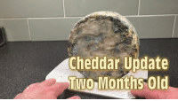 Old, Cheddar, and Update: Cheddar Update  TWOMonths Old