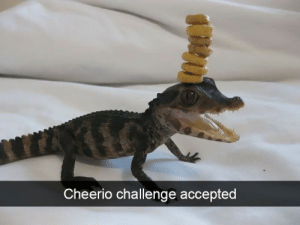 Have some faith in humanity, people! These animal stories will put an instant smile on your face, even if it's just for a few minutes.#animals #animalmemes #wholesome #wholesomememes #wholesomeanimals #funnyanimals: Cheerio challenge accepted Have some faith in humanity, people! These animal stories will put an instant smile on your face, even if it's just for a few minutes.#animals #animalmemes #wholesome #wholesomememes #wholesomeanimals #funnyanimals