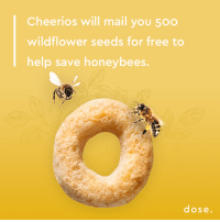 Cheerios will mail you 50o  wildflower seeds for free to  help save honey bees.  dose -Heather  (just did mine!) Link in comments