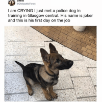 Crying, Funny, and Joker: cheis  @ChelseaMcFerren  I am CRYING I just met a police dog in  training in Glasgow central. His name is joker  and this is his first day on the job What an adorable little boy (@hilarious.ted)