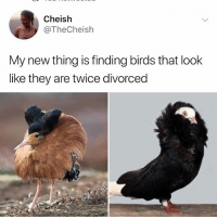 Memes, Birds, and 🤖: Cheish  @TheCheish  My new thing is finding birds that look  like they are twice divorced I died